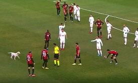 Türkiyə çempionatında it meydana girərək oyunu dayandırıb - VİDEO