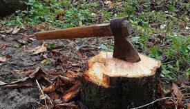 Ağacların kəsilməsi ilə bağlı şikayət araşdırılıb